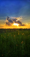 Morning Bliss (Mona.esha) Tags: warm warmth sun sunlight light lightrays rays scattered clouds sky colours shades contrast contrasts colourcontrast ground grass plants flowers yellow beauty mothernature nature