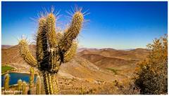 Vegetación nativa / Native vegetation (Claudio Andrés García) Tags: trekking cactus montaña mountain senderismo senderism desierto desert naturaleza nature verano summer fotografía photography shot picture cybershot flickr paisaje landscape