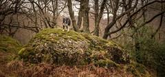 Rock Troll (JJFET) Tags: border collie sheepdog dog herding