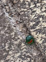 Marble (carlos_ar2000) Tags: bolita bola ball marble vidrio glass color colour calle street diagonal diagonally juego game puertomadero buenosaires argentina