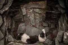 Hide n Seek (JJFET) Tags: border collie dog sheepdog herding