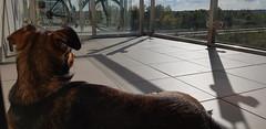 Beza's Relax (Andrzej Kocot) Tags: andrzejkocot art action dog pov dreams sweetlikebeza sunset