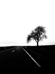 Lonely. (marfis75) Tags: nebenan nebenbei close near neben wachsen wachsn bäumchen trist tristesse nature natur einsamkeit eins monochrome sw bw be blackwhite schwarzweis road street strasse baum single tree one einsam einzeln letzter last final einziger einzig lonely marfis75