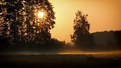 *** (pszcz9) Tags: polska poland przyroda nature natura naturaleza poranek morning wschódsłońca sunrise mgła fog słońce sun mist drzewo tree łąka meadow beautifulearth sony a77 pejzaż landscape