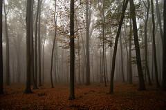 ... (Fotagi) Tags: trees forest fog autumn podkarpacie landscape las buczyna drzewa mgła jesień