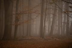 ... (Fotagi) Tags: las drzewa mgła jesień natura fog autumn tree trees forest nature przyroda landscape