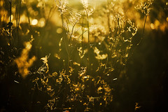 Field of dreams (tonguedevil) Tags: outdoor outside countryside nature winter field afternoon colour light shadows sunlight bokeh