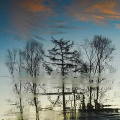 Spegling (Skurtveit) Tags: skyer clouds tree tre tjørn vann vatn is ice lake reflection refleksjon