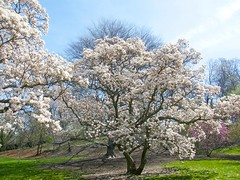 Looking Forward to Spring (Stanley Zimny (Thank You for 46 Million views)) Tags: tree spring seasons flowers bronx botanical garden