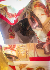 And so it is... (Katrina Wright) Tags: img2409edit cat feline christmas decorative wrappingpaper cute whiskers eyes pets ella