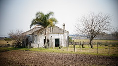 Abandoned house. (Andrés Bentancourt) Tags: ride travel building old structure house abandoned tree palm day silence relax peace beauty landscape countryside nature green uruguay montevideo rural