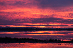 Just before sunrise (Vurnman) Tags: california norcal yubacounty sunrise dawn rice fields flooded water reflection sky clouds color commute
