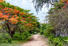 Ibo Town Path -- Before Cyclone Kenneth (January 2019) (Trouvaille Blue) Tags: africa mozambique quirimbas archipelago ibo island trouvailleblue cabodelgado