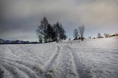 Al colle...... (celestino2011) Tags: alberi neve tormenta vento nuvole ultima2019