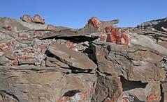 Jasper (Ron Wolf) Tags: blm curtisformation earthscience geology jasper jurassic mesozoic quartz sanrafaelreef erosion mineral mineralogy nature weathering grandcounty utah