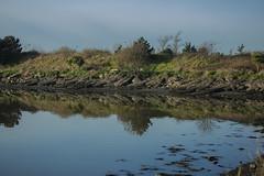 Irishtown nature reserve (Wendy:) Tags: christmas 2019 naturereserve itishtown