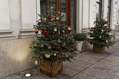 Christmas, Christmas (margycrane) Tags: christmas christmastree choinka ulica street warsaw warszawa sonyilce7m3 fe24105mmf4goss