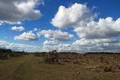 The New Forest - Where Nothing Clouds a Beautiful View! (antonychammond) Tags: newforest forest moorland gorse sky clouds hampshire newforestponies williamrufus williamtheconqueror contactgroups thegalaxy nwn cloudscapes scenicsnotjustlandscapes