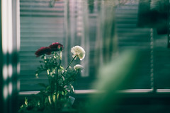 Ordinary day (ryo_ro) Tags: a7 ilce7 sony jupiter 50mm f15 lomo lomography zenit