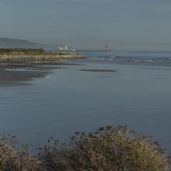on Christmas day in the morning! (Wendy:) Tags: christmas 2019 port dublin liffey seabirds sea lighthouse poolbeg