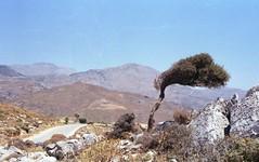 Preveli, Creta (Ciaa08) Tags: analogica analogue analog filmcamera filmphotography film 35mm nikonfm2 kodakcolorplus200 creta estate vento lemiefotofannoschifo vintage