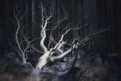 Sturmopfer (Petra Runge) Tags: woodland dark winter beeches trees wald natur dunkel buchen bäume gespensterwaldnienhagen petrarunge nature