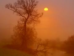 PC260088HF (hlh 1960) Tags: tree baum fluss river mist misty nature natur landschaft landscape sun sunrise sonne sonnenaufgang sol soleil atardecer wasser compo