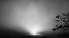 foggy Christmas (ro_ha_becker) Tags: monochrome schwarzweiss zwartwit biancoenero blancetnoir blackandwhite blancoynegro minimalistic mist fog contrejour sonnenaufgang nebel winnenden