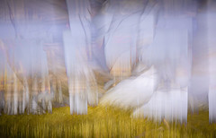 WISPS OF THE WILL (Deborah Hughes Photography) Tags: abstract multipleexposure impressionism abstractnature incameraeffects abstractphotography impressionistphotography intentionalcameramovement