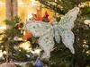Christmas butterfly, Basildon Park