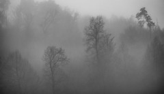 foggy day b&W (matwolf) Tags: fog foggy woods wood forest outdoor blackandwhite bw monochrome mono cold winter trees arbres brouillard jourbrumeux froid nebel silhoutte bäume wald drausen landscape landschaft noiretblanc ngc