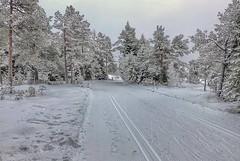 Ski tracks (Kjetil Øvrebø) Tags: winter snow ski nature norway forest landscape frost skiing outdoor walk tracks hike trondheim saupstad picsart
