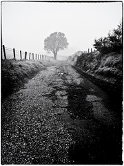 Lone Tree in The Fog (Missy Jussy) Tags: lonetreeinthefog newhey rochdale landscape lancashire lane tree lonetree fence path fog blackwhite blackandwhite bw mono monochrome outdoor outside countryside december 2019