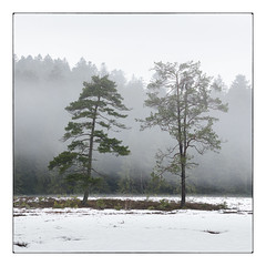 La Ténine (gravelin.yves) Tags: arbre brumes flore laténine lac paysage vosges neige