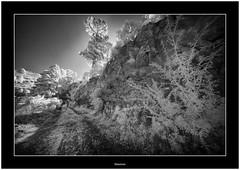 Beautiful Garafía, Isla de La Palma, Canary Islands (Bartonio) Tags: lapalma laowa1018mm45 infraroja infrared 720nm sonya7ir modified monochrome garafía canaryislands islascanarias naturaleza españa countrysite