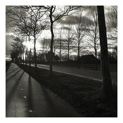 WALKING ALONG COUNTRY ROADS (5) (der zweite blick!) Tags: niederlande netherlands 2019 december dezember countryroad landstrasse blackandwhite bw sw schwarzweiss noordbeveland derzweiteblick der2teblick d2b unterwegs ontheroad winter trees bäume allee alley colijnsplaat