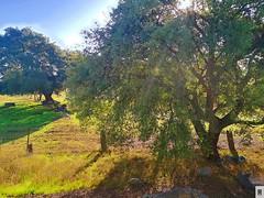 Sierra Morena, campo de encinas. Naturaleza (In Dulce Jubilo) Tags: naturaleza nature colors colores arbol arboles encina encinas sierramorena campo paisaje panorámica andalucia andalusia espagne españa spanien spain