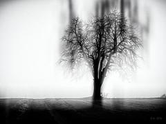 Between Shadows and Dreams... (Ody on the mount) Tags: abstrakt anlässe blackwhite bäume em5iii experimente fototour himmel kunst landschaft mzuiko4518 omd olympus pflanzen silhouette abstract art bw blackandwhite landscape monochrome noclouds sw schwarzweis sky tree