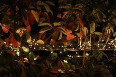 Christmas lights (vtzerpos) Tags: canon 6d mark ii 70300mm is usm