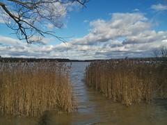 Lake Balaton Minor on Boxing Day (sandorson) Tags: hungary magyarország zala water lake lakebalatonminor kisbalaton