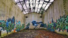 Lost Place - Kunstvoll (KaAuenwasser) Tags: lostplace vergessen alt ruine moderneruine gebäude halle wald zerstört abbruch kunst kunstvoll graffiti iffezheim dezember 2019 kaserne lager farbe bunt farben stein mauern dach vogel heuschrecke malen