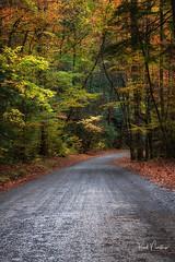 Autumn Road (Reid Northrup) Tags: nature smokys autumn cascade fall forest greatsmokymountainnationalpark landscape leaves nationalpark tennessee trees tremont road scenic nikon reidnorthrup