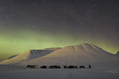 The Icelandic horse (Gísli Már Árnason) Tags: aurora stars icelandic horse iceland night northern lights winter snow