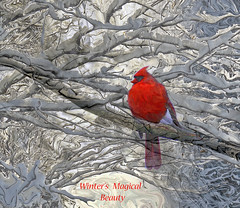Winter's Magical Beauty (kfocean01) Tags: winter snow bird cardinal photoshop filters text trees color red painterly art abstract artdigital