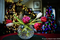 -20191226The Conductor56-Edit (Laurie2123) Tags: burnside35 christmas2019 christmasbokeh laurieabbotthartphotography laurieturner laurieturnerphotography lensbaby nikond800 home laurie2123 rose tulips stuartcrystal