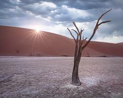 The Claw (Hilton Chen) Tags: camelthorntrees deadvlei landscapephotography namibdesert namibnaukluftnationalpark namibia sanddunes sossusvlei starburst sunburst sunrise whiteclaypan