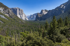 Yosemite (ValeTer_) Tags: mountainous landforms mountain natural landscape nature wilderness reserve range valley vegetation environment nikon d7500 california national park usa yosemite nps nikond7500 nationalpark forests