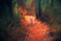 Down The Path 1.3 (DavidSenaPhoto) Tags: impressionisticphotography path intentionalcameramovement woods fuji dog xt2 icm multipleexposure fujifilm impressionism