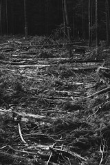 Bass River Clearcutting (reclaimednj) Tags: 2019 forest trees pinelands pinebarrens clearcutting forestmanagement forestry newjersey newgretna bassrivertownship bassriverstateforest nj