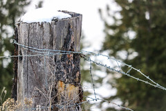 Forest fence (Jessie T*) Tags: happyfencefriday snow fencepost rusticfencepost winter forest barbedwire